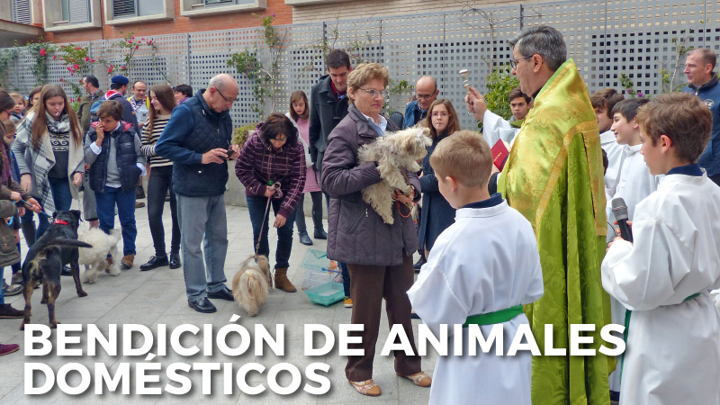 bendicion animales